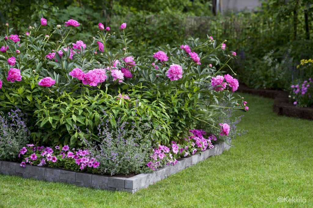Planting_Mix_for_Perennials_Roses_0587_b